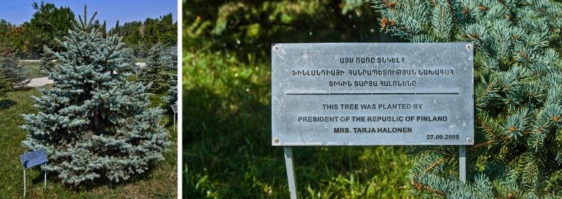 AM_090905 181 Armenia Tarja Halosen istuttama puu Jerevanin kans