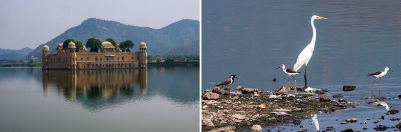 IN_151027 Intia_0552 Jaipurin Vesipalatsi Jal Mahal Rajasthaniss