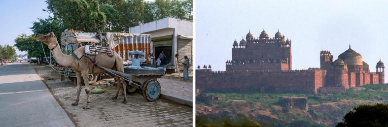 IN_151030 Intia_0036 Kamelikärryt Sawaimadhopurissa Rajasthanis