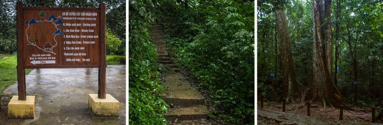 VN_160128 Vietnam_0195 Cuc Phuongin kansallispuiston reitti tuha