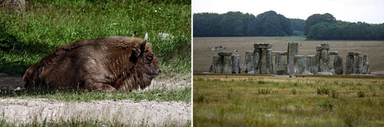 PL_100629 154 Puola Euroopan biisoni visentti Białowiezan kansa
