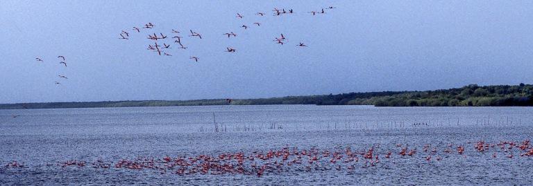 CU254411 Kuuba Flamingoja Nuevesinlahdella Camagüeyssa