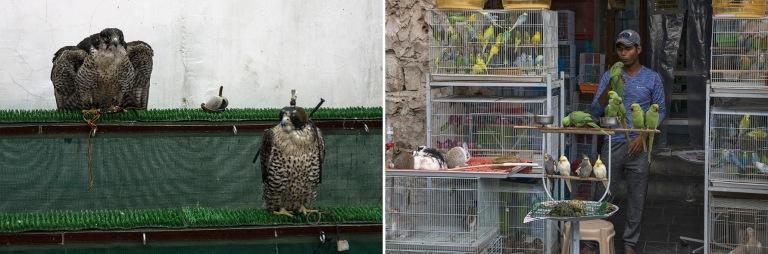 QA_170212 Qatar_0274 Dohan Falcon Souq