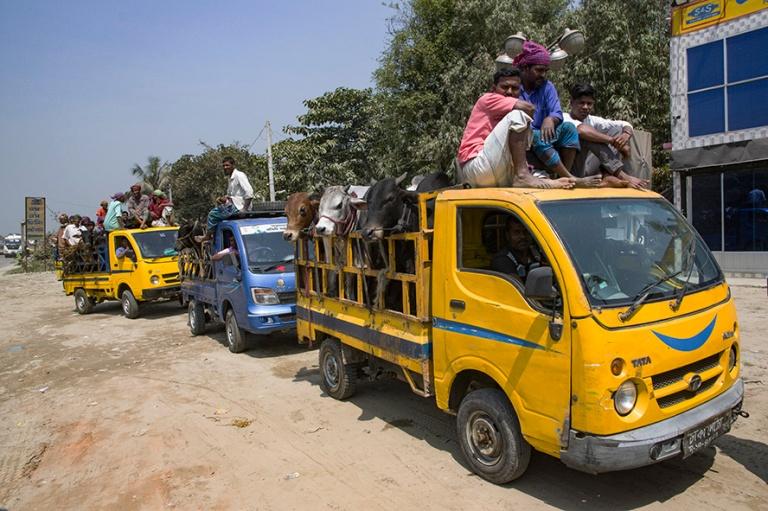 BD_180320 Bangladesh_0082 Karjakuljetuksia Tangailin eteläpuole