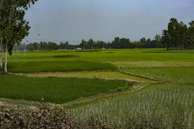 BD_180321 Bangladesh_0541 Riisipeltoa Natoren ja Bogran välill