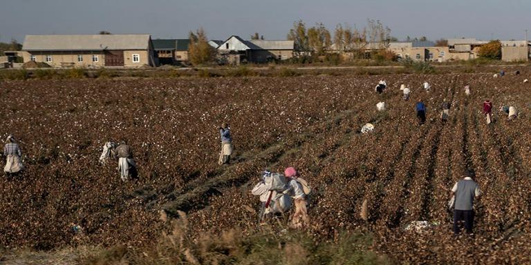 UZ_181025 Uzbekistan_0148 Puuvillan poimijoita Buharan alueella