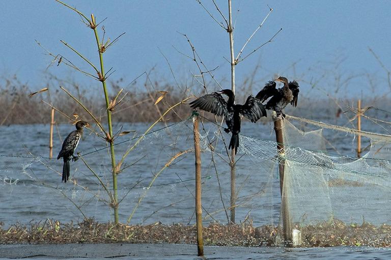 BJ_190111 Benin_0309 Merimetsot Nokoué-järvellä