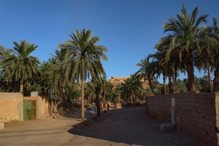 DZ_190316 Algeria_0529 Beni Isguenin palmulehto M'zabin laakso