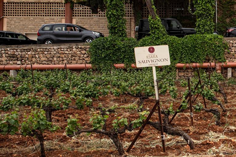 LB_190506 Libanon_0395 Château Ksara Zahlessa Bekaan laaksossa