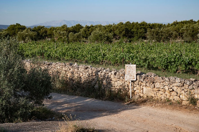 HR_190629 Kroatia_0214 Viini- ja oliiviviljelmiä Stari Gradin t