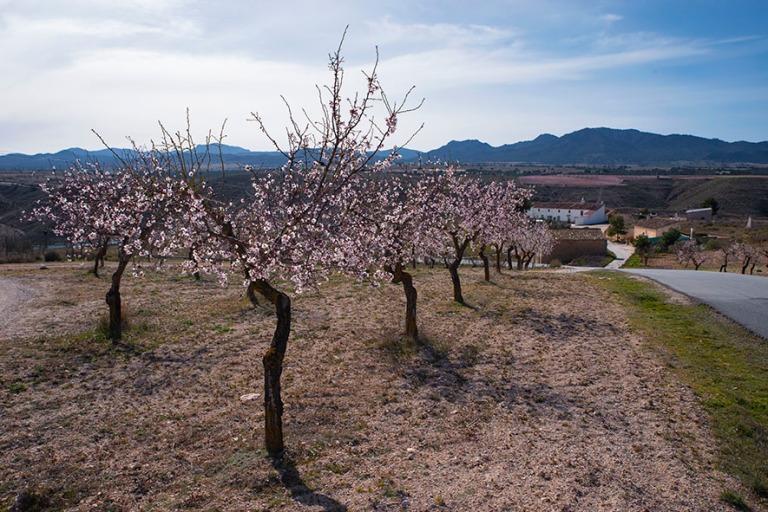 ES_190217 Espanja_0032 Kirsikankukintaa Pulpitessa Andalusian Gr