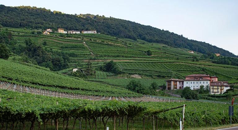 IT_190705 Italia_0226 Viiniviljelmiä San Michele all'Adigessa T