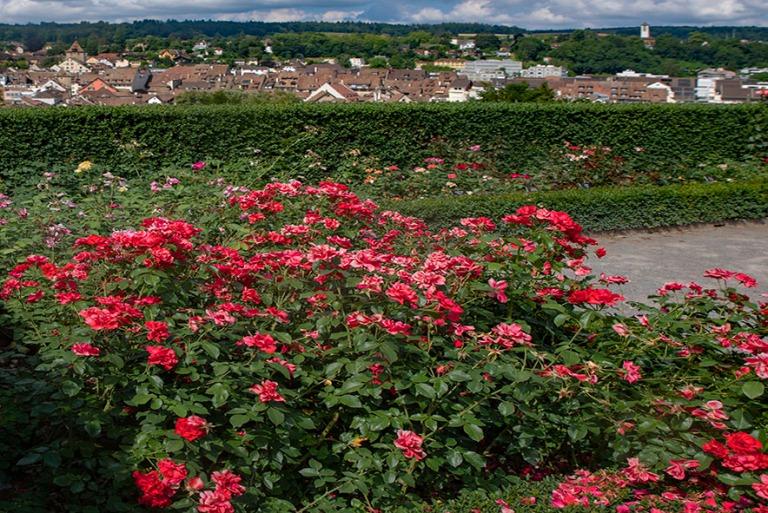 CH_190714 Sveitsi_0045 Schaffhausenin Rosengarten Munot