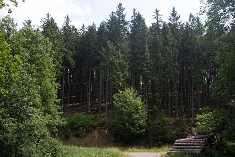 DE_190718 Saksa_0016 Oberharz am Brockenin metsää Saksi-Anhalt