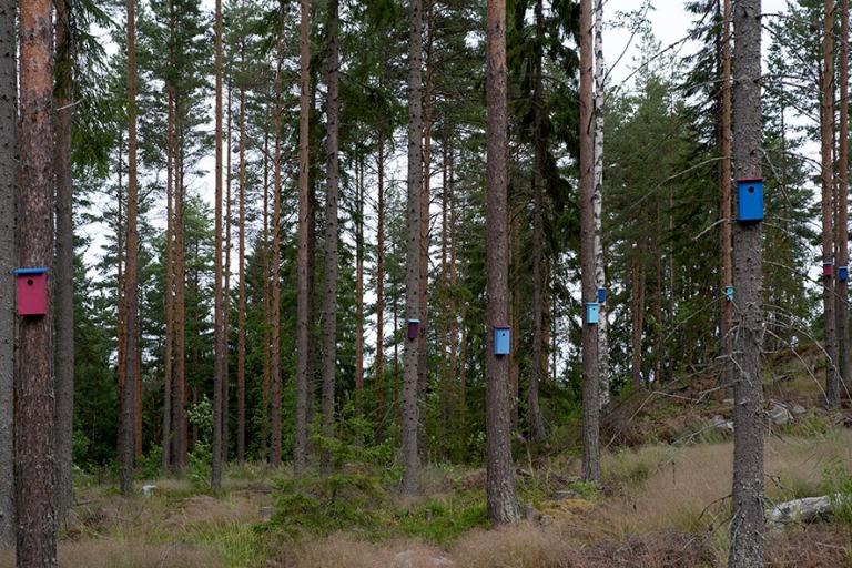FI_200704 Suomi_0037 Päijänteen kansallispuiston Päijätsalo