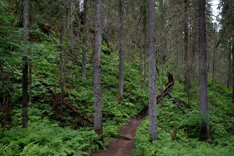 FI_200704 Suomi_0163 Korkeakosken maastoa vesiputouksen luona Ku